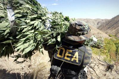 DEA war on marijuana