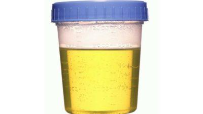 synthetic urine vs certo