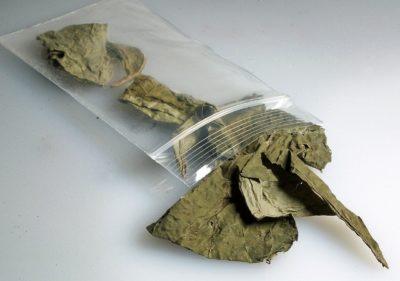 dried salvia divinorum