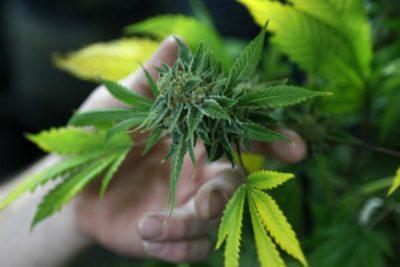 legal status of cannabis 2019