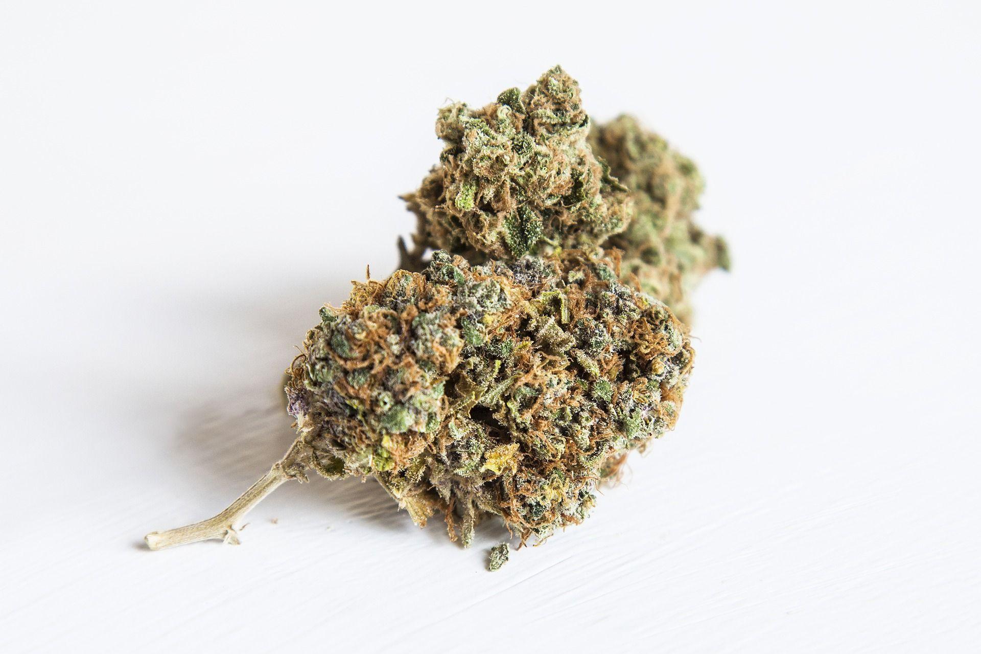 The Top 5 Marijuana Jobs You Can Have
