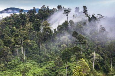 White Sumatra Kratom Review